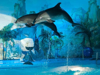 Dolphin show - places to visit in Kharkiv, Ukraine